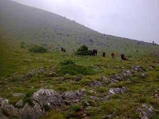 Susret Sljemenskog pastuha s Velebitskim krdom. :o)